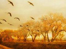 نان سالهای کودکی / شعری از ایهور پاولیوک
